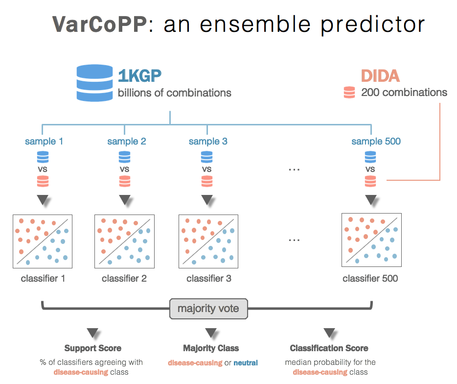 summary of varcopp structure